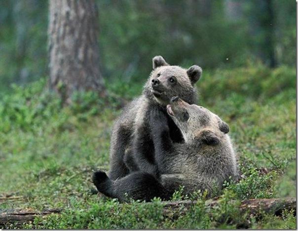 Ursinhos carinhosos (23)