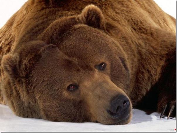Ursinhos carinhosos (10)