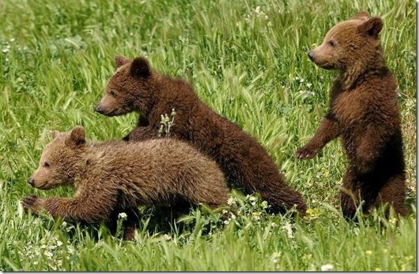 Ursinhos carinhosos (9)