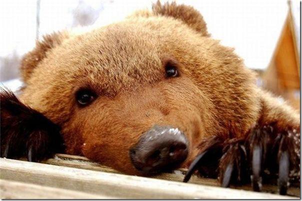 Ursinhos carinhosos (2)