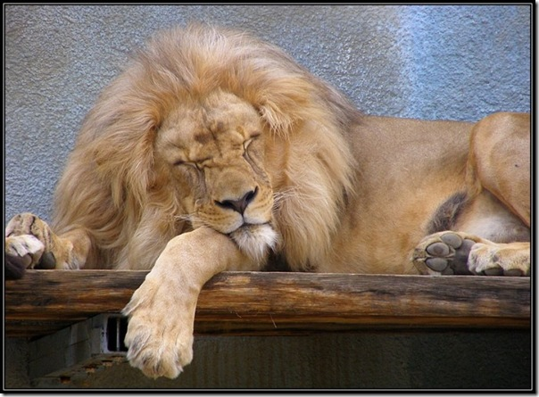 Adoráveis animais dormindo (12)