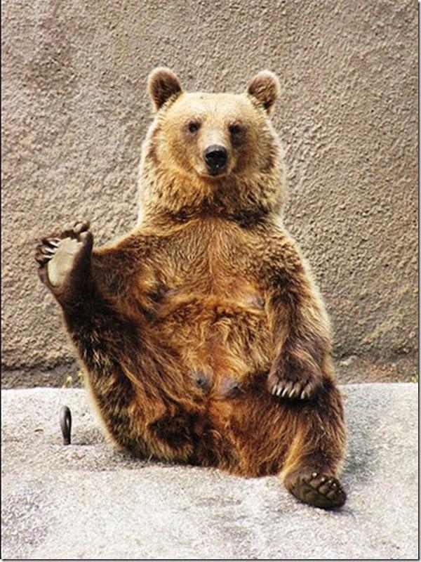 Urso praticando Yoga (3)
