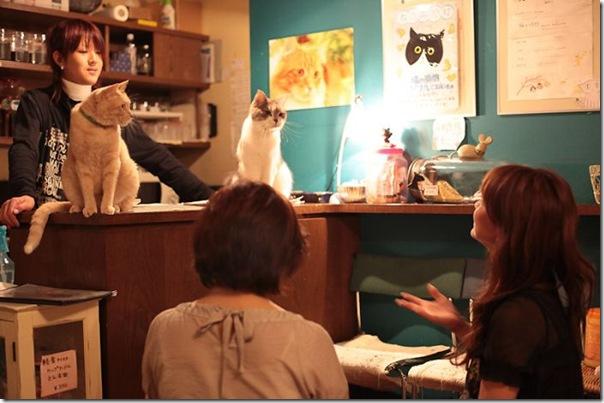 Tóquio gato café (31)