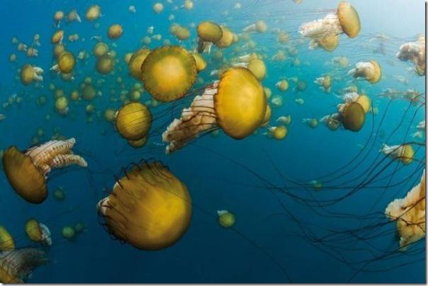 Vida marinha (4)