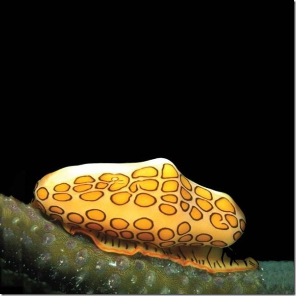 Vida marinha (12)