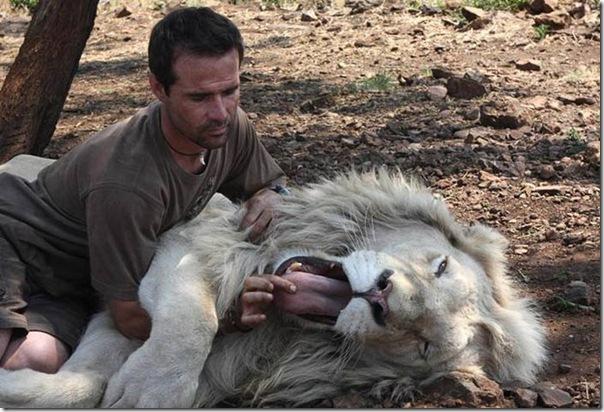 Kevin Richardson, O encantador de leões (12)