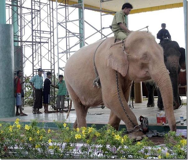 Elefante branco (4)