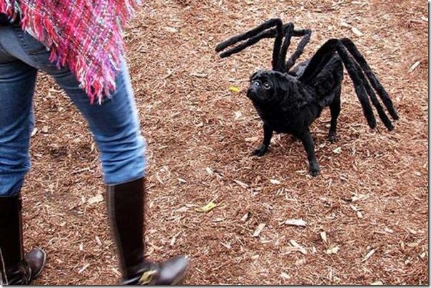 Fotos engraçadas dos Halloween (1)