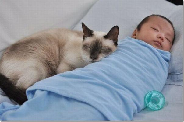 gatinho muito fofo dormindo