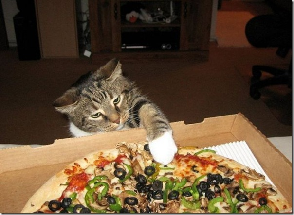 gatinho roubando um pedaço de pizza