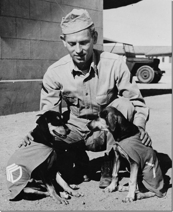 "Private First Class Norman Diamond of Brooklyn, New York gives a congratulatory pat to ""Staff Sergeant Basic"" and ""Private First Class Adler,"" who have just received promotions under authority of DL (Dog Land) regulation 0000-900. They are mascots of a U.S. Signal Service company somewhere in India. 1942 Farm Security Administration - Office of War Information Photograph Collection (Library of Congress)"