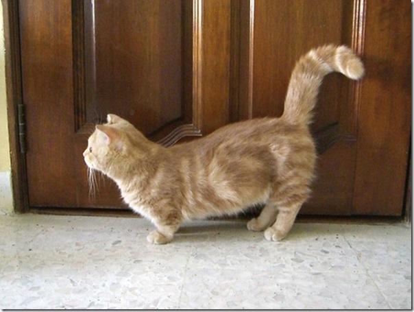 Gatinhos fofinhos (4)