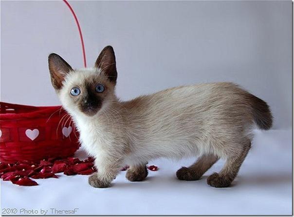 Gatinhos fofinhos (2)