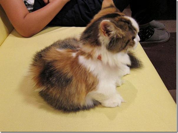 Gatinhos fofinhos (10)