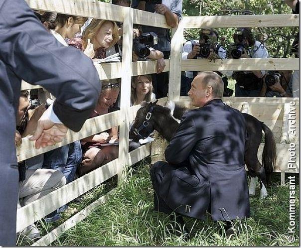 Vladimir Putin e o seu amor pelos animais (17)
