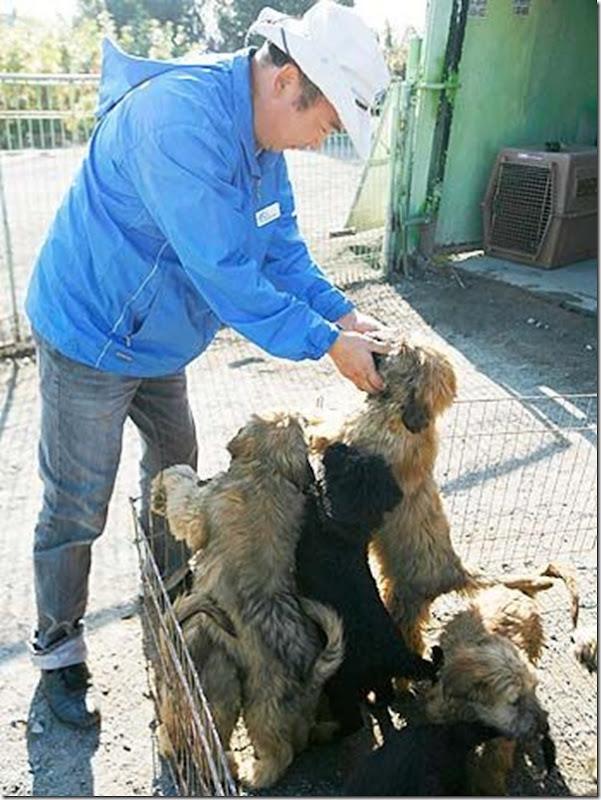 cães extintos na coreia recuperação (8)