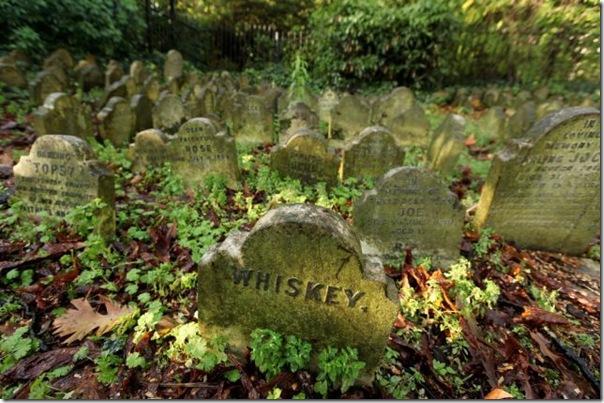 Cemitérios de animais de estimação em Londres (3)