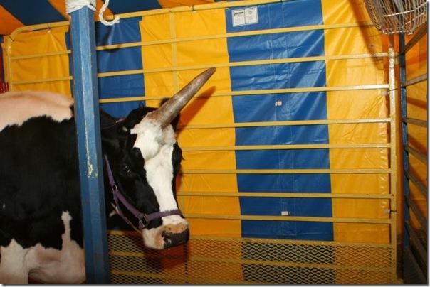 vaca unicornio (2)