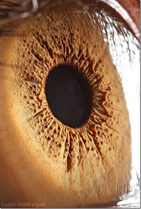 Fotos macro de olhos humanos (16)