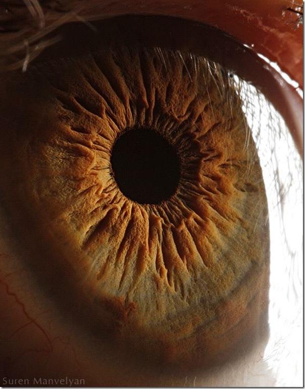 Fotos macro de olhos humanos (14)