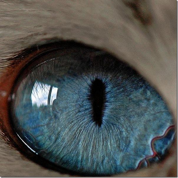 Fotos macro de olhos humanos (8)