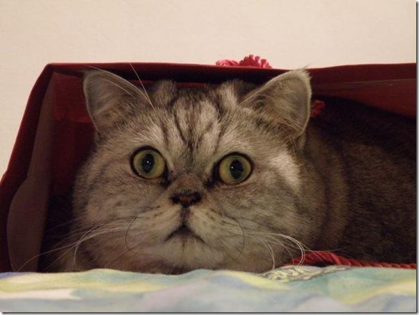 Giuly a gata gorda que ficou famoso na internet (6)