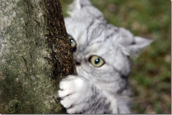Giuly a gata gorda que ficou famoso na internet
