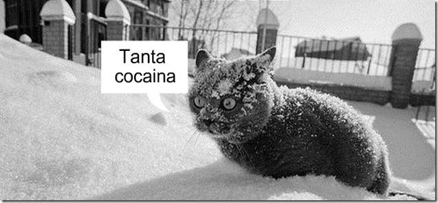 gato travado