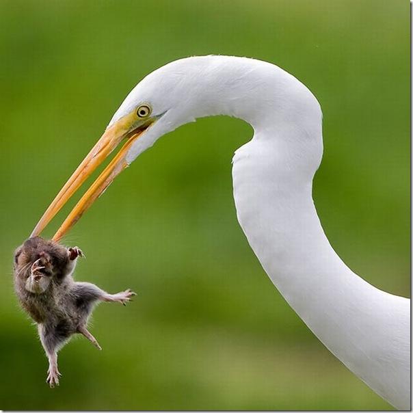 As melhores fotos de animais de 2010 (10)