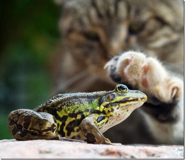 As melhores fotos de animais de 2010 (6)