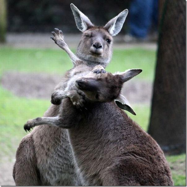 As melhores fotos de animais de 2010 (5)