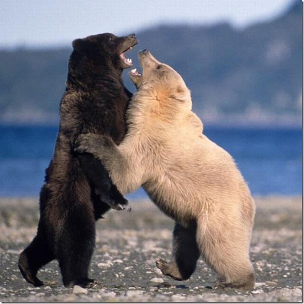 As melhores fotos de animais de 2010 (4)