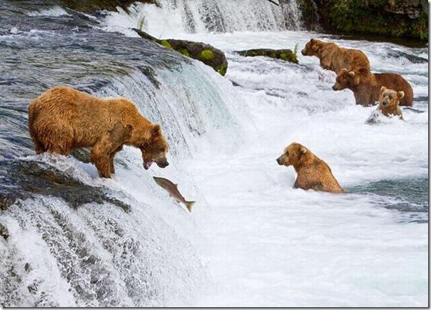 As melhores fotos de animais de 2010 (1)