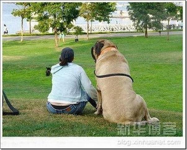 Cães gigantes (1)