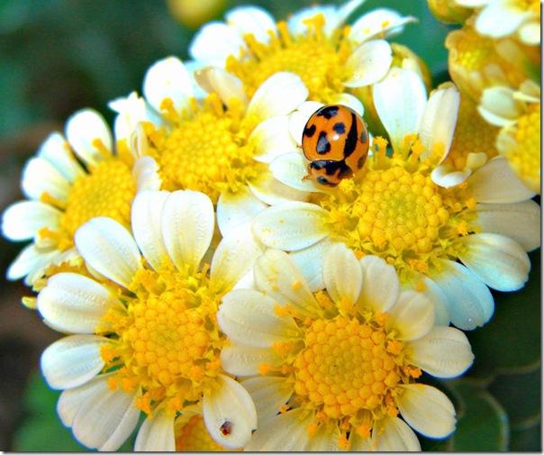 O Pequeno mundo da natureza por Louise Docker (15)