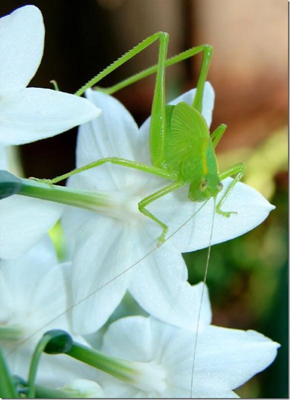 O Pequeno mundo da natureza por Louise Docker (6)
