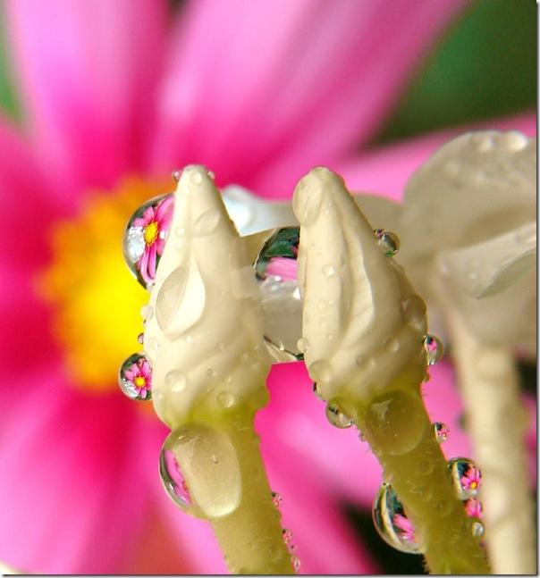 O Pequeno mundo da natureza por Louise Docker