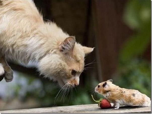 Gato e rato frente a frente (1)