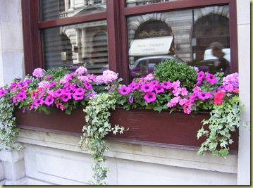 DowntownWindowbox