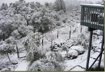 SnowyDeer