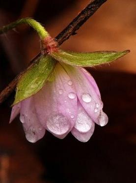 flor com chuva
