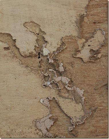 termite damage_3572