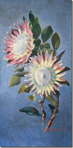 Stewart titcombe - proteas