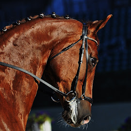 by Lisa Dean - Animals Horses