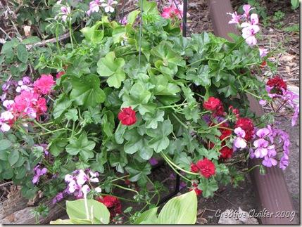Flowers 055