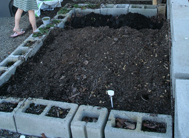 Cinder blocked raised vegetable garden