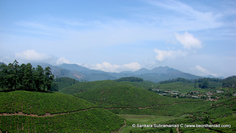 first tea plantation in india