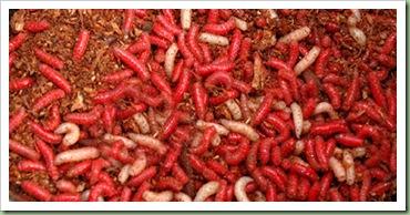 12-Maggots-7