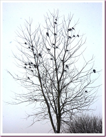 birds in the tree