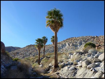 Jan 12, 2011 Palm Oasis
